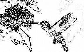 feeding hummingbird Outline